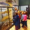Uczniowie MSPEI w Muzeum Przyrodniczym w Łodzi